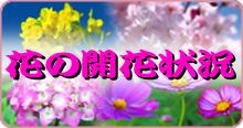 サイドイメージ(花の開花状況)
