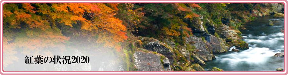 富郷渓谷(紅葉状況)